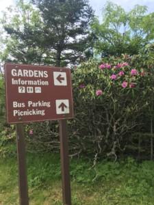 6-12-2018 garden bloom #2